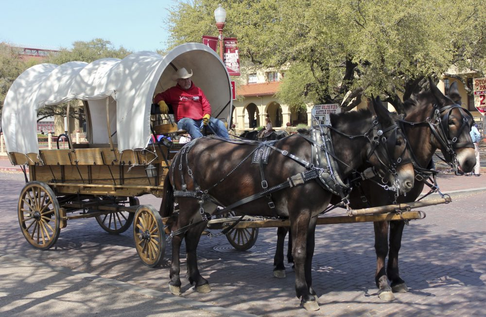 A Covered Wagon, Mule Team and Driver